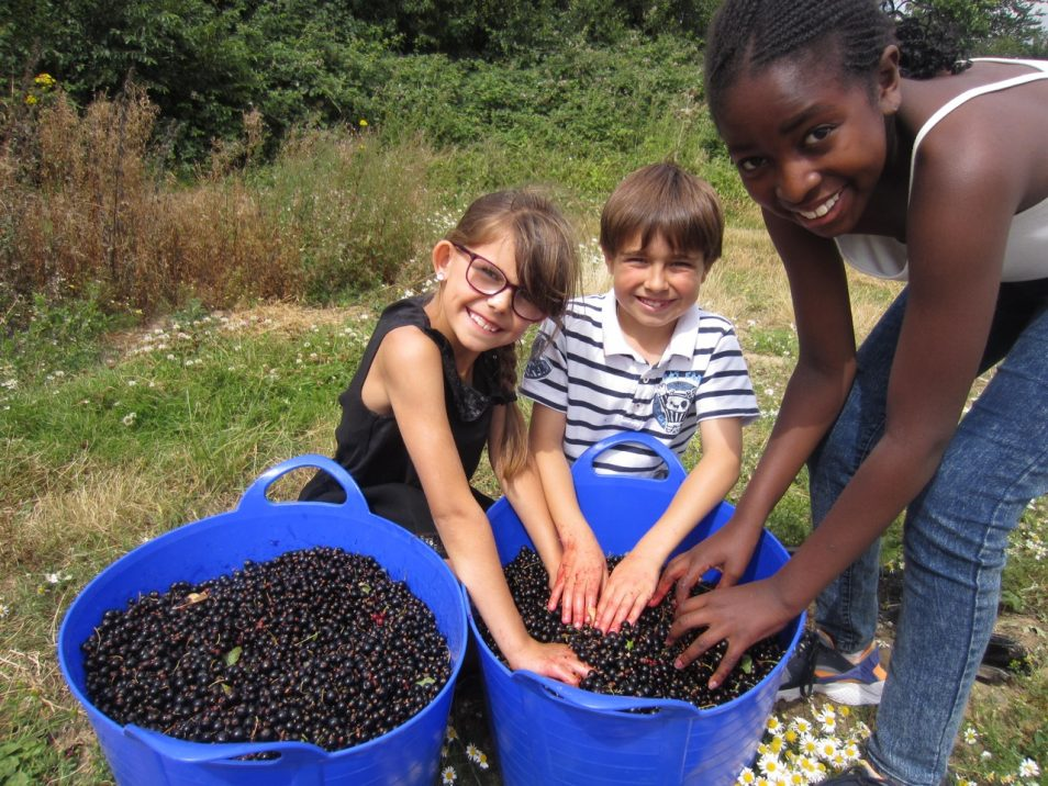 Blackcurrant Gleaning Trip, Essex, 2016.