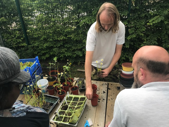 Seed sowing and potting on