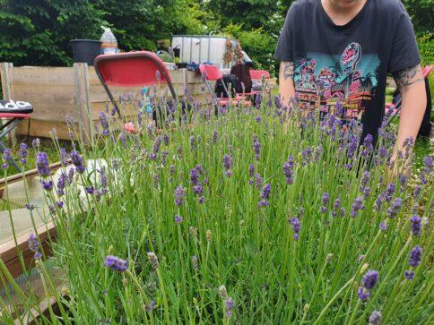 Community Herbalism: Building a Local Herbal Network
